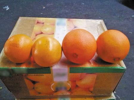 左为云冠橙,右为脐橙。