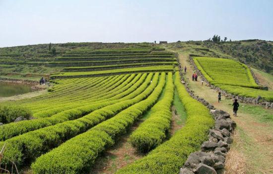 台州香格里拉美景