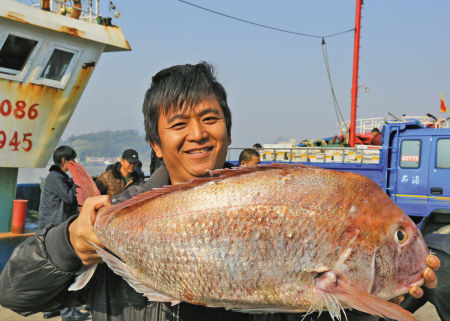象山一网金鲷鱼重达2000斤