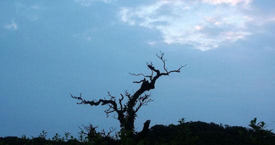 晨曦中猫儿山上的小树