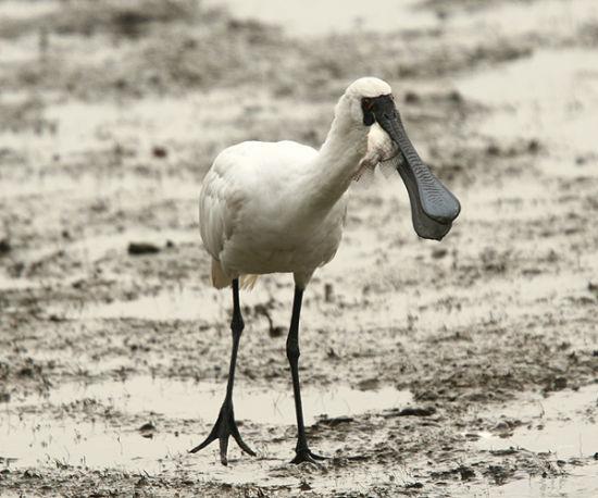 香港湿地公园候鸟齐飞