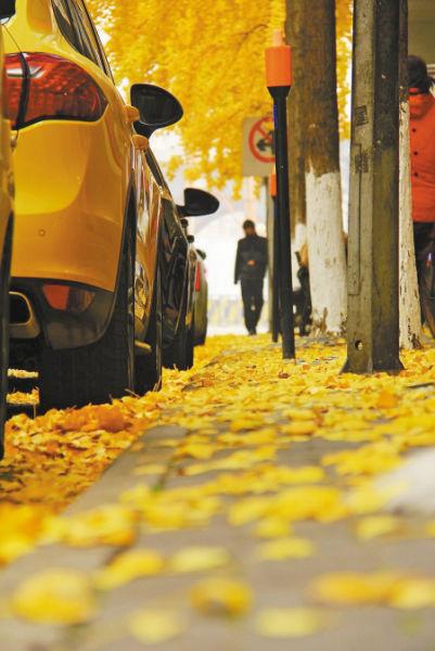 """9日,在海曙县学街,银杏落叶满地,非常漂亮。网友""""东海沙子""""摄"""