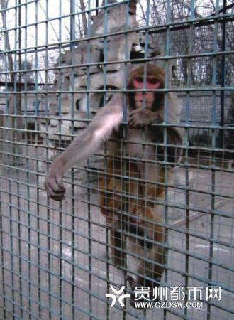 7岁女童被猴子咬断食指盘点可爱动物伤人事件