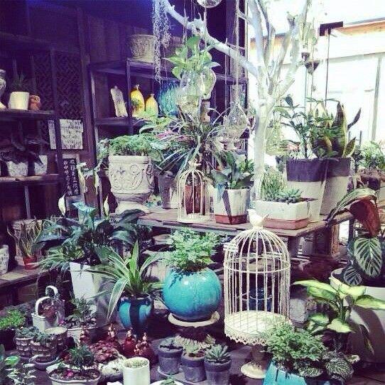 优势:店铺设计巧妙,摆设让人眼睛为之一亮,感觉身处在多肉植物的