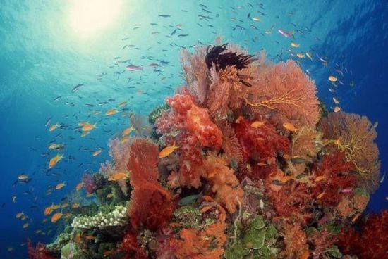 亚龙湾神秘海底世界