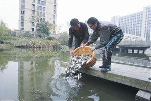 昨天,海曙黄家河,工作人员在投放鱼苗 记者 张培坚 摄