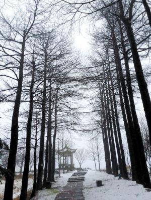四明山森林公园雪景如画