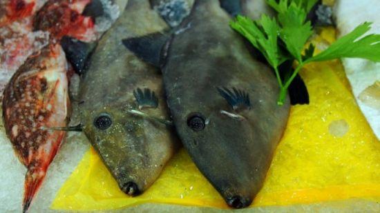 橡皮鱼,当地人叫剥皮鱼。