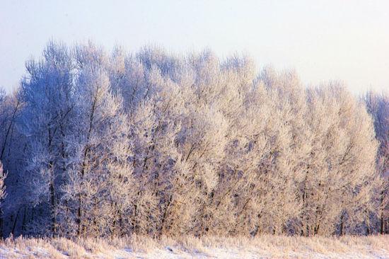 组图:去呼伦贝尔体验冬季欣赏美丽的雾凇雪景
