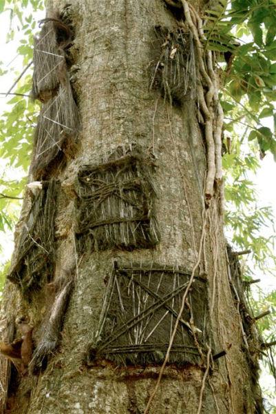 婴儿树之墓(印度尼西亚)