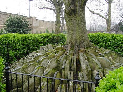 """""""哈代树""""墓园(英国伦敦)"""