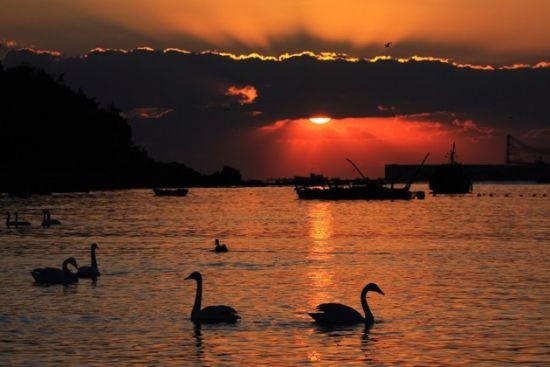 落日下的天鹅湖