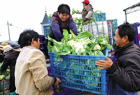 象山菜贩节前蔬菜收购忙