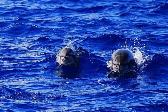 与海豚同游