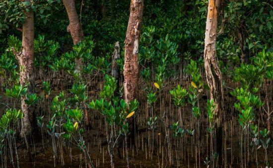 深圳湾红树林