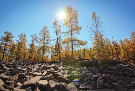 石滩边的森林