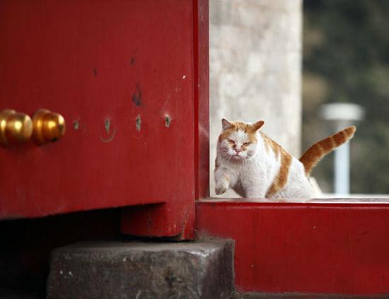 揭秘大内动物猫保安狗侍卫紫禁城里显身手