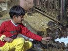 印度神庙供奉2万只老鼠受信徒朝拜