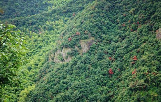 怀化中坡山森林公园 水濂山森林公园游乐场 东莞市观音山森林公园