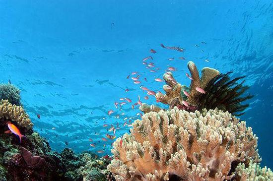 水下珊瑚美景