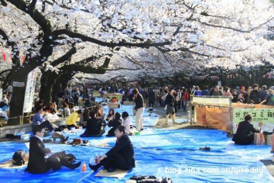 野公园赏樱 来源:七色地图