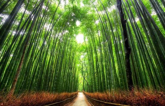 组图:执子之手漫步全球十大最美林荫路
