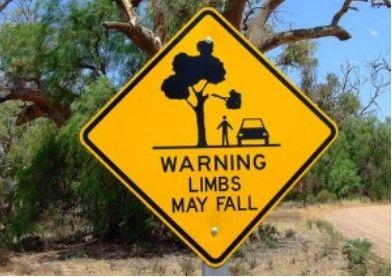 小心掉下的树枝