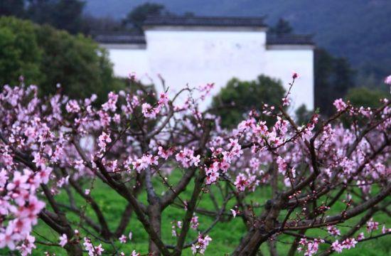 象山影视城桃花园