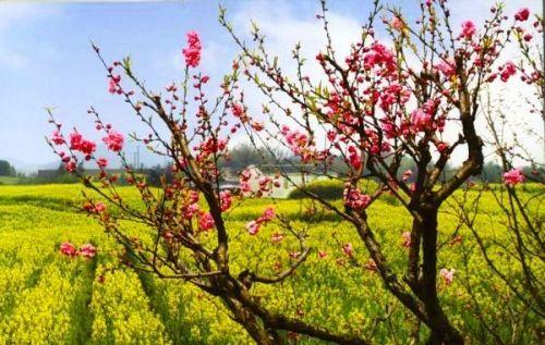 烟花三月到江南寻觅最清甜的春色(组图)