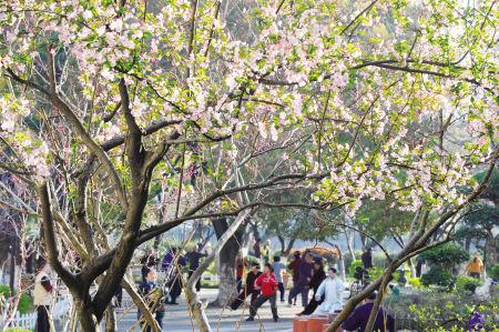 图文:甬城今天正式入春