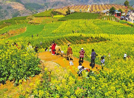 游客漫步宁海桑洲油菜花丛中。