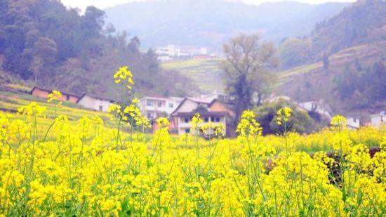 组图:去开化台回山赏油菜花界的布达拉宫