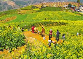 游客漫步宁海桑洲油菜花丛中