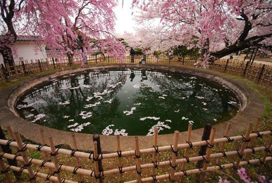 京都 来源:新华网