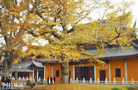 寺庙前两棵银杏树静默地站立着