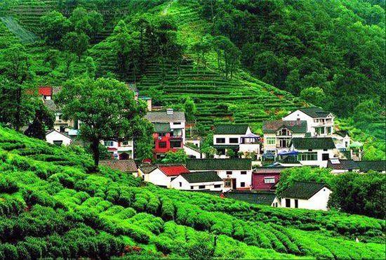 组图:四月杭州春意正浓上山入巷寻春茶