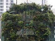广州业主疑搭建森林掩护违章建筑