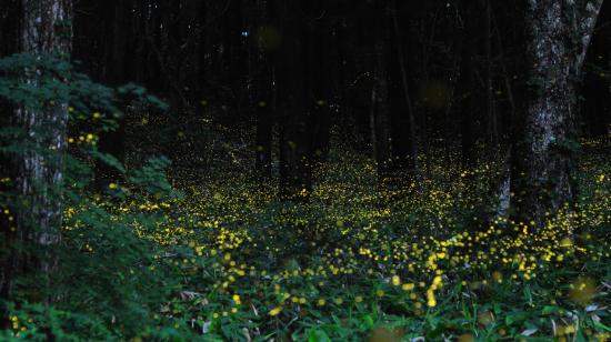 萤火虫主题园