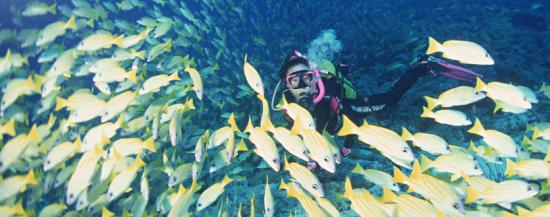 潜水和鱼儿对话