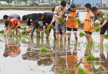 百名爸爸带孩子体验种水稻