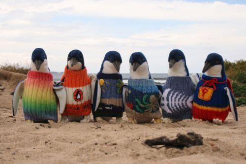 高龄老奶奶为菲利普岛企鹅编织千件毛衣(组图)