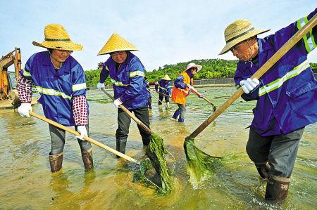 宁海20多位环卫员工清理母亲河