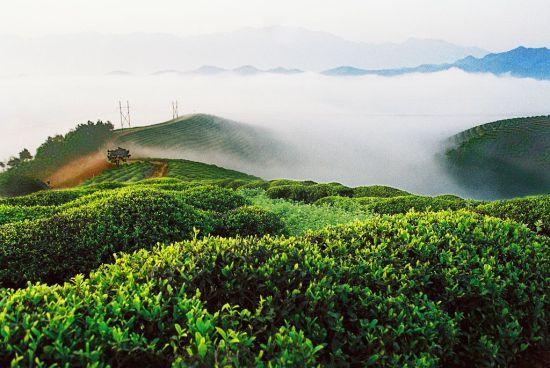 樱桃采摘地:杭州康村侬园