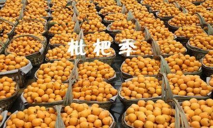 青岛南山枇杷园