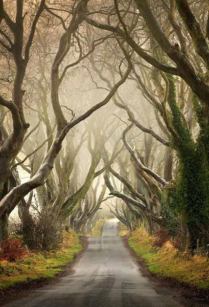 恐怖的童话森林
