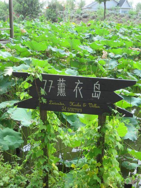 上海77熏衣岛度假村