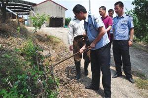 民警在铲除罂粟花 通讯员供图