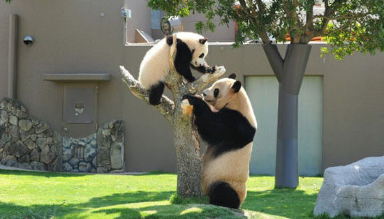冒险世界   冒险世界里有一个白滨动物园,它是五只熊猫的家园,其中还