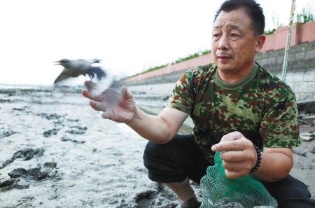 昨天傍晚,在青林湾大桥北堍的姚江畔,戎先生从地笼网中逐一掏出受困的鸟儿,当即放飞。记者 张海华 摄