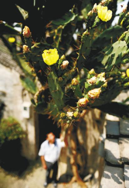 仙人掌每年6月开花